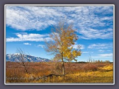 Willow Flats in den Tetons