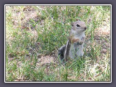 Death Valley - Antelope Squirrel